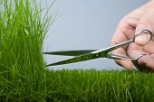 The hand mower cutting scissors a grass (natural)