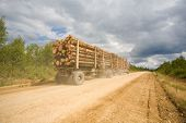 stock photo of afforestation  - Forest industry - JPG