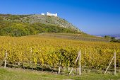 ruins of Devicky castle with vineyard, Czech Republic