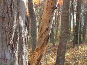 Zen Trees