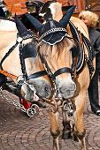 stock photo of stagecoach  - heads of two stagecoach horses in detail - JPG