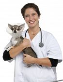 Vet carrying a Chihuahua wearing a space collar in front of white background