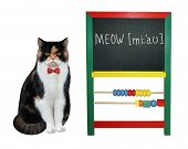 The Cat Teacher In A Red Bow Tie Wrote The Word Meow On The Blackboard. White Background. Isolated. poster