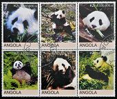 Collection stamps shows panda bears