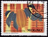 A stamp printed in Brazil shows Mahogany Swietenia macrophylla king