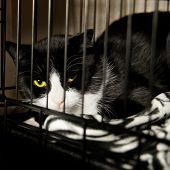 Homeless Cat - Rescued Feline in Cage recovering from Surgery