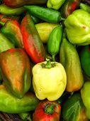 sweet bulgarian ripe peppers