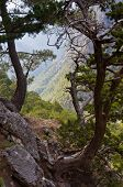 pic of samaria  - Path thru Samaria gorge, central part of Crete island