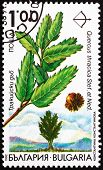 Postage stamp Bulgaria 1992 Thracian Oak, Quercus Thracica