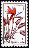 Postage stamp Romania 1965 Bird of Paradise Flower, Strelitzia
