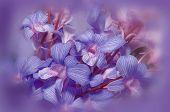 Flower Illustration In Purple, With Vignette