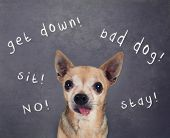 image of pooch  - a dog in front of a chalkboard with commands written on it - JPG