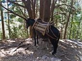 image of samaria  - Donkey is the only way to transport injured people thru Samaria gorge - JPG