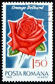 Postage stamp Romania 1970 Orange Delbard, Rose Cultivar