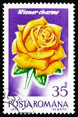 Postage stamp Romania 1970 Wiener Charme, Rose Cultivar