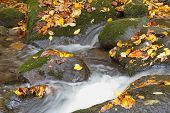 rocks and fall leaves in mountain stream