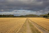 Harvest Time And Stormy Sky