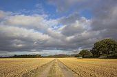Farm Track And Stormy Sky