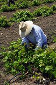 mexikanische Landarbeiter
