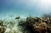 Turtle in Ocean Seascape