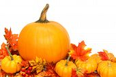pic of gourds  - Autumn arrangement of pumpkins with red leaves over white - JPG