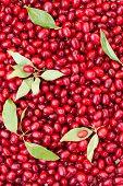 Cornel berries