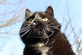 Black Cat With White Tie
