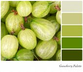 A background of fresh gooseberries in a colour palette with complimentary colour swatches