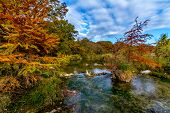 Large Cypress Trees with Stunning Fall Color Lining a Crystal Clear Texas Hill Country Stream.