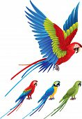pic of spread wings  - Macaw parrot spread wings and tree colorful sitting Aras photo realistic vector - JPG