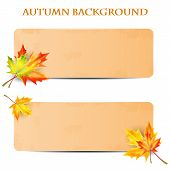 .background With Autumn Leaves And Sheet Of Paper Into A Cell.autumn Background.school Background.ve