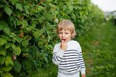 Little Boy With Fresh Raspberries On Organic Self Pick Farm