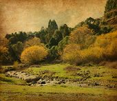 vintage image of  autumn landscape.   Te Urewera National Park, North Island, New Zealand.  Added  p