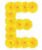 Letter E Made From Dandelions