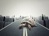 hufe tortoise on abstract road