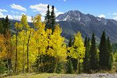 picture of conifers  - colourful mountains of Colorado during foliage season - JPG