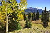 Yellow Aspens And Colourful Mountains Of Colorado During Foliage