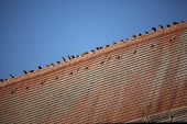 Birds On A Red Roof
