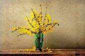 Still Life Bouquet Forsythia