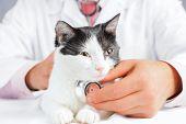 Vet Listens A Feline