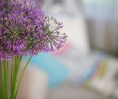 image of chinese parsley  - Chinese Chive flowers in the flower vase on table in the living room - JPG