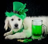 St. Patrick's Day Puppy