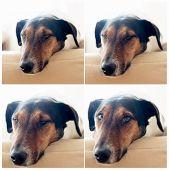 Cute dog taking a nap