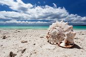 picture of boracay  - Seashell on tropical beach - JPG