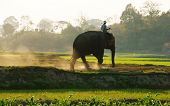 People Ride Elephant On Path At Countryside