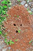 Home Of Ants