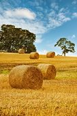 Hay bales in field with summer sky