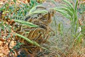 Nest Of Centipede