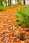 Pathway In Colorful Autumn Arboretum Park