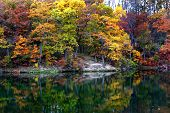 Árvore de Autum reflexões